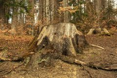 Δέντρα σε ένα δάσος Στοκ εικόνες με δικαίωμα ελεύθερης χρήσης