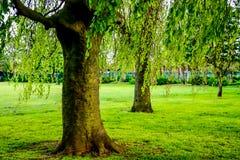 Δέντρα σε ένα πάρκο την ηλιόλουστη ημέρα στοκ φωτογραφία