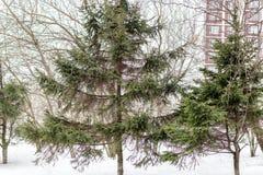 Δέντρα σε ένα χιονώδες ναυπηγείο Στοκ φωτογραφία με δικαίωμα ελεύθερης χρήσης