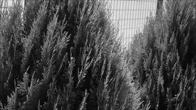 Δέντρα σε γραπτό φιλμ μικρού μήκους