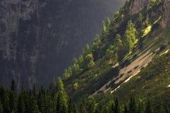 Δέντρα σε μια βουνοπλαγιά στην ηλιοφάνεια στοκ φωτογραφία με δικαίωμα ελεύθερης χρήσης