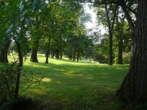 Δέντρα σε μια βουνοπλαγιά στοκ φωτογραφίες με δικαίωμα ελεύθερης χρήσης