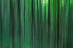 Δέντρα σε μια θαμπάδα Στοκ εικόνες με δικαίωμα ελεύθερης χρήσης