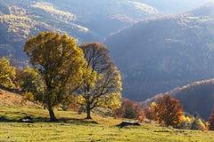Δέντρα σε μια κλίση λόφων με το φως του ήλιου επάνω από την κοιλάδα βουνών Στοκ φωτογραφία με δικαίωμα ελεύθερης χρήσης