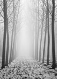 Δέντρα σε μια ομιχλώδη ημέρα Στοκ εικόνες με δικαίωμα ελεύθερης χρήσης