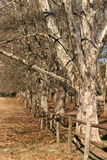 Δέντρα σε μια σειρά Στοκ Εικόνα