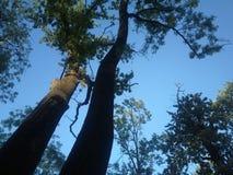 Δέντρα σε μια όμορφη αρμονία Στοκ φωτογραφία με δικαίωμα ελεύθερης χρήσης