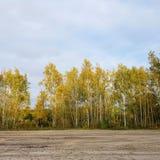 Δέντρα σημύδων στην πρώην λουρίδα τειχών του Βερολίνου Στοκ εικόνα με δικαίωμα ελεύθερης χρήσης