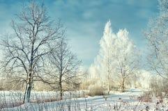 Δέντρα σημύδων με τον παγετό Στοκ εικόνα με δικαίωμα ελεύθερης χρήσης