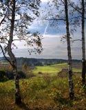 Δέντρα σημύδων Στοκ φωτογραφία με δικαίωμα ελεύθερης χρήσης