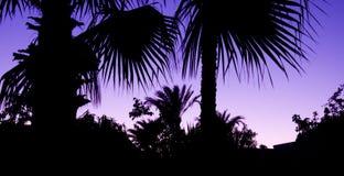 δέντρα σκιαγραφιών φοινικ Στοκ εικόνα με δικαίωμα ελεύθερης χρήσης