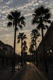 δέντρα σκιαγραφιών φοινικ Στοκ φωτογραφία με δικαίωμα ελεύθερης χρήσης