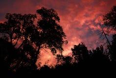 δέντρα σκιαγραφιών στοκ φωτογραφίες με δικαίωμα ελεύθερης χρήσης