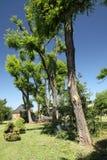 δέντρα σπιτιών Στοκ φωτογραφίες με δικαίωμα ελεύθερης χρήσης