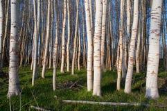 δέντρα στάσεων στοκ εικόνα