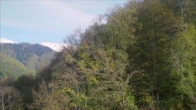 Δέντρα στα βουνά το φθινόπωρο φιλμ μικρού μήκους