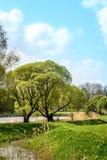 Δέντρα στα λουλούδια Στοκ εικόνα με δικαίωμα ελεύθερης χρήσης