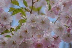 Δέντρα στα λουλούδια Στοκ Εικόνα