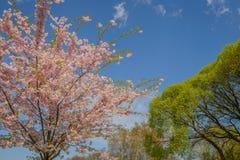 Δέντρα στα λουλούδια Στοκ φωτογραφίες με δικαίωμα ελεύθερης χρήσης