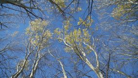 Δέντρα στα τέλη του φθινοπώρου στο δάσος απόθεμα βίντεο