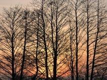 Δέντρα στα χρώματα ανατολής Στοκ Εικόνες