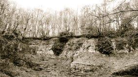 Δέντρα στην άκρη Γ απότομων βράχων Στοκ εικόνα με δικαίωμα ελεύθερης χρήσης