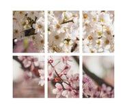 Δέντρα στην άνθιση Στοκ Φωτογραφίες