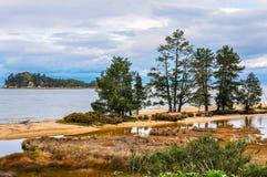 Δέντρα στην ακτή, εθνικό πάρκο του Abel Tasman, Νέα Ζηλανδία Στοκ Εικόνες