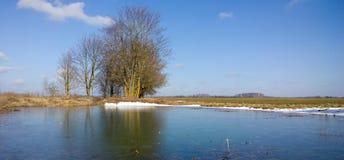 Δέντρα στην ακτή της λίμνης Στοκ εικόνα με δικαίωμα ελεύθερης χρήσης