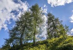 Δέντρα στην αρμονία Στοκ εικόνες με δικαίωμα ελεύθερης χρήσης