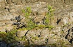Δέντρα στην ερείκη στο αγροτικό βουνό Στοκ φωτογραφία με δικαίωμα ελεύθερης χρήσης