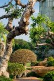 Δέντρα στην ισοτιμία Στοκ εικόνα με δικαίωμα ελεύθερης χρήσης