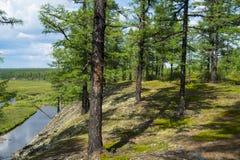Δέντρα στην κλίση Στοκ Εικόνες