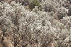Δέντρα στην κοιλάδα του Amari Κρήτη Ελλάδα Στοκ Εικόνες