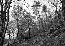 Δέντρα στην κοιλάδα Colden στοκ φωτογραφία με δικαίωμα ελεύθερης χρήσης