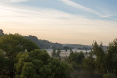 Δέντρα στην ομίχλη Στοκ φωτογραφία με δικαίωμα ελεύθερης χρήσης