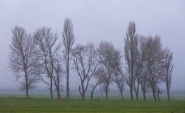 Δέντρα στην ομίχλη στοκ φωτογραφίες
