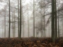 Δέντρα στην ομίχλη Στοκ Φωτογραφία