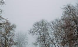 Δέντρα στην ομιχλώδη ημέρα Μυστήριο ευμετάβλητο υπόβαθρο τοπίων της Misty Στοκ εικόνα με δικαίωμα ελεύθερης χρήσης