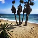 Δέντρα στην παραλία στοκ φωτογραφίες