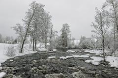 Δέντρα στην πλευρά ποταμών με το χιόνι το χειμώνα Στοκ Φωτογραφίες