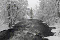 Δέντρα στην πλευρά ποταμών με το χιόνι το χειμώνα Στοκ Εικόνα