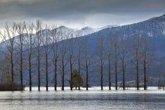 Δέντρα στην πλημμυρισμένη πεδιάδα της λίμνης Cerknica, Σλοβενία Στοκ φωτογραφία με δικαίωμα ελεύθερης χρήσης