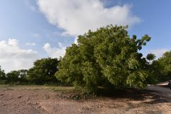 Δέντρα στην Τανζανία Στοκ φωτογραφία με δικαίωμα ελεύθερης χρήσης
