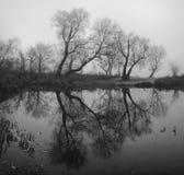 Δέντρα στην υδρονέφωση στοκ φωτογραφίες με δικαίωμα ελεύθερης χρήσης