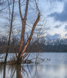 Δέντρα στην υδρονέφωση Στοκ εικόνες με δικαίωμα ελεύθερης χρήσης