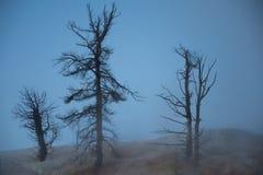Δέντρα στη αχνιστή υδρονέφωση ξημερωμάτων στις μαμμούθ καυτές ανοίξεις στο εθνικό πάρκο Yellowstone Στοκ εικόνες με δικαίωμα ελεύθερης χρήσης