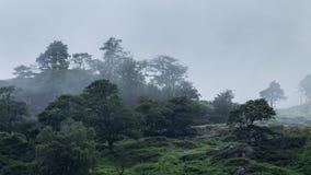 Δέντρα στη βουνοπλαγιά στην παχιά ομίχλη απόθεμα βίντεο