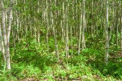 Δέντρα στη δασική, όμορφη φύση Στοκ φωτογραφία με δικαίωμα ελεύθερης χρήσης