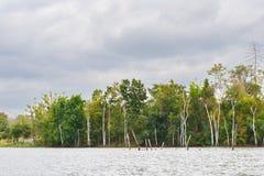 Δέντρα στη δεξαμενή αεριωθούμενος-Kot Στοκ Εικόνα